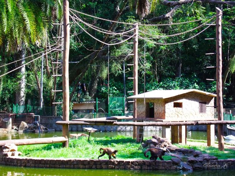 macacos bosque em campinas