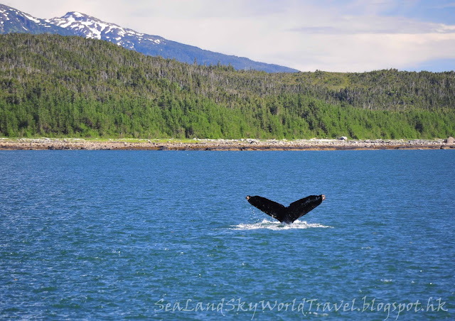 朱諾, Juneau Whale watching, 觀鯨團