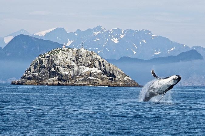 ch民「NPOにも興味深い団体があるんだな」IWC脱退後の商業捕鯨に向けて、小学校で鯨肉料理を披露(まとメテオ@chまとめ)