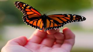 La farfalla che non riuscì a volare