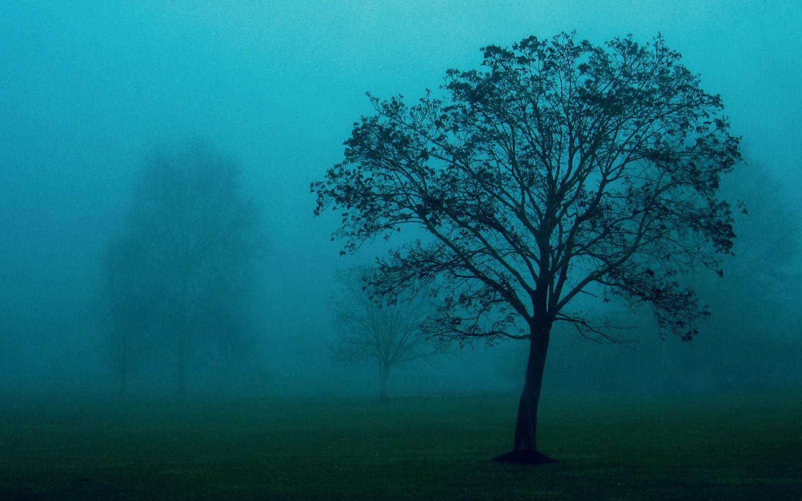 wallpapers trees in the mist