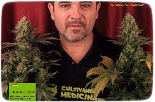 toni13 cannabis