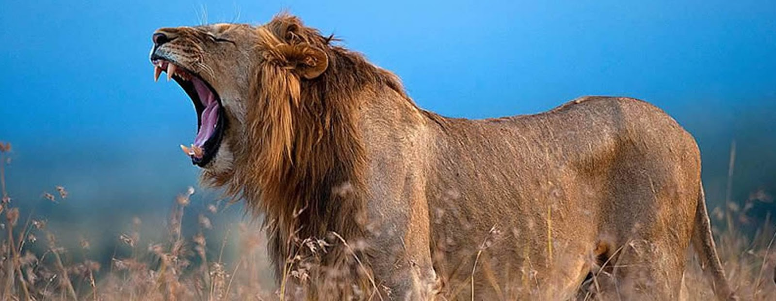 Affordable 12 days Kenya Safari Tour - Amboseli, Lake Nakuru , Masai