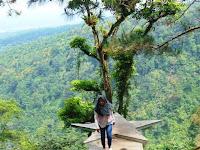 Bakal Ada Spot Baru di Wisata Hutan Pinus Gunungsari