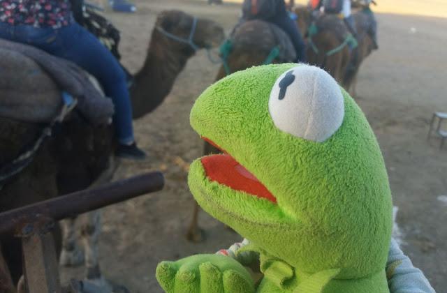 3dniowa wycieczka na pustynię, wielbłądy, maroko, tanie loty, spanie na pustyni maroko