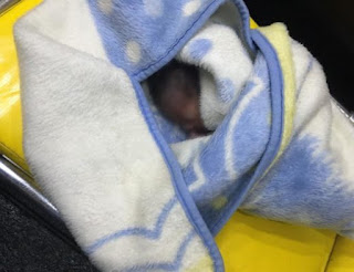 Photos:  Newborn baby rescued after his mother threw him into pit toilet