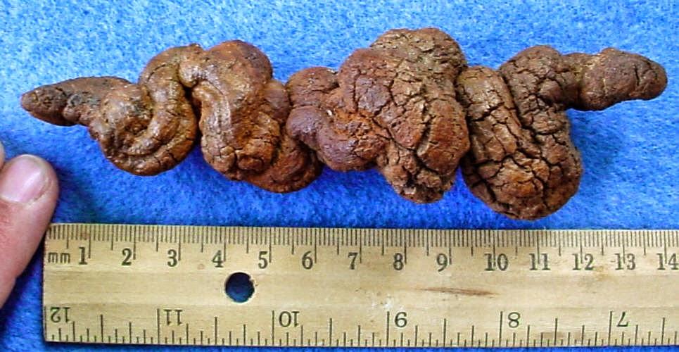 coprolites indicate former presence of organism elixir of knowledge
