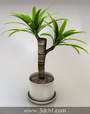 potted plant free 3d model