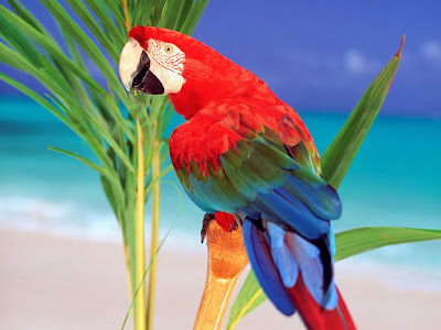 parrot hd photos ,wallpaper