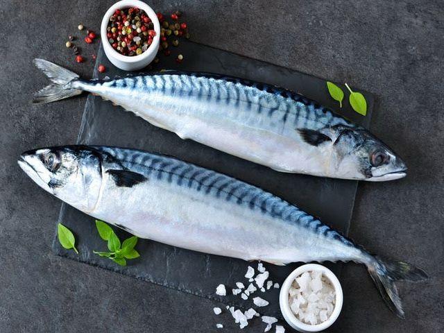 Gambar Ikan Makarel