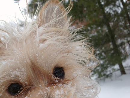 Confessions of a Dapper Dog: Winter