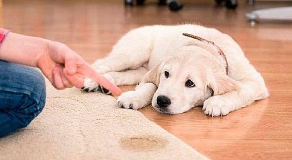 manchas en las alfombras