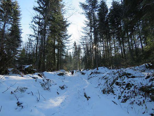 Droga przez las.