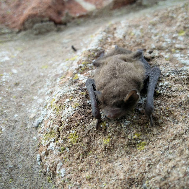 One of the bats that was rescued
