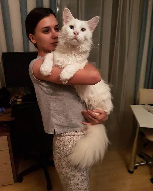 """Làm quen với chú mèo """"voi còi"""" lúc nào cũng nũng nịu đòi ôm ấp"""