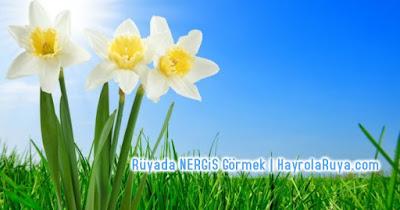 nergis-çiçeği-cicek-ruyada-gormek-nedir-gorulmesi-ne-anlama-gelir-dini-ruya-tabiri-tabirleri-islami-ruya-tabiri-yorumlari-kitabi-ruya-yorumu-hayrolaruya.com
