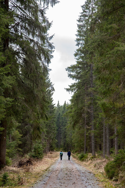 Auf vergessenen Wegen von Finsterau nach Buchwald  Wandern im Bayerischen Wald  Wanderung Nationalpark Bayerischer Wald 09