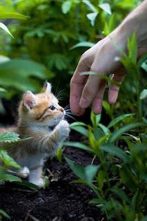 Mengenalkan Kucing pada Keluarganya yang Baru