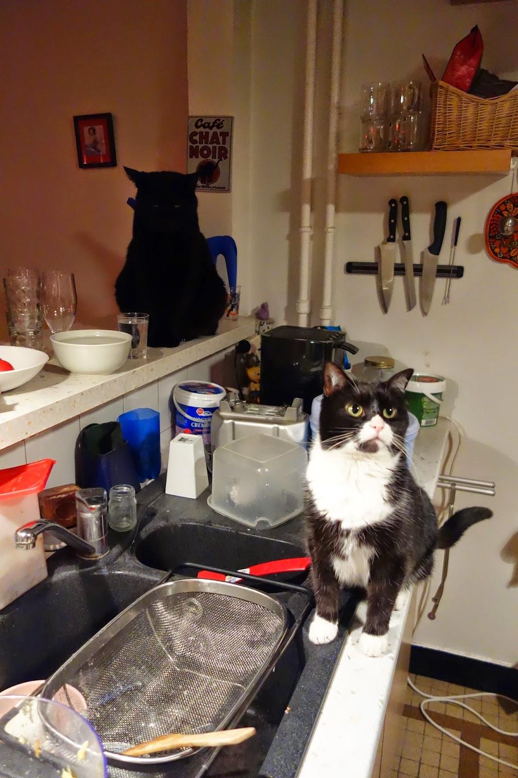 Фримусс на кухне
