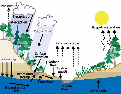 8 Proses Terjadinya Siklus Hidrologi Xylem And Floem