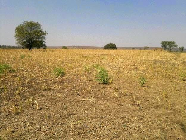 7 Acres Red Soil Plain Land for Sale at Nandi Wanaparthy   Digital