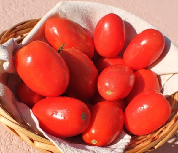 these are fresh plum tomatoes I use in making tomato Italian sauce
