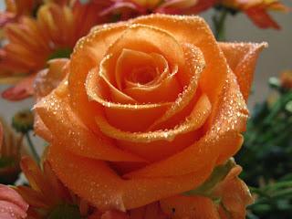 flor-rosa-de-petalos-de-color-naranja
