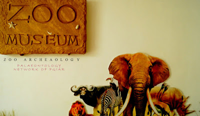 Zoo Archeaology Event for Palaeobiodiversity Diploma Student