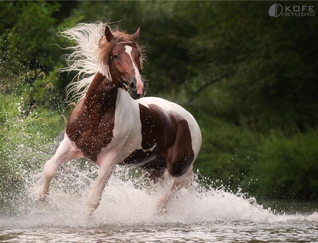 بالصور : معلومات عن الخيل و الخيول العربية