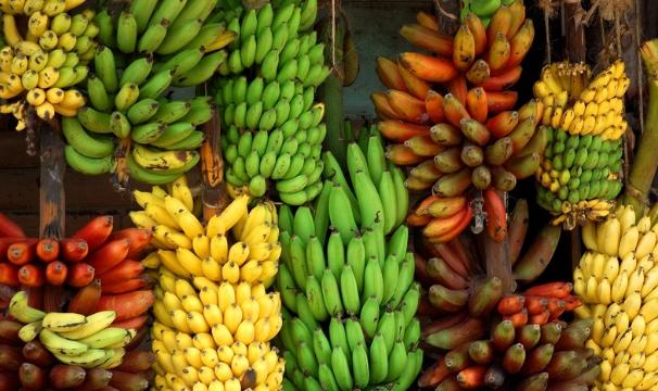 Gizi, Nutrisi Dan Vitamin Yang Ada Dalam Kandungan Pisang Ambon, Raja, Dan Susu