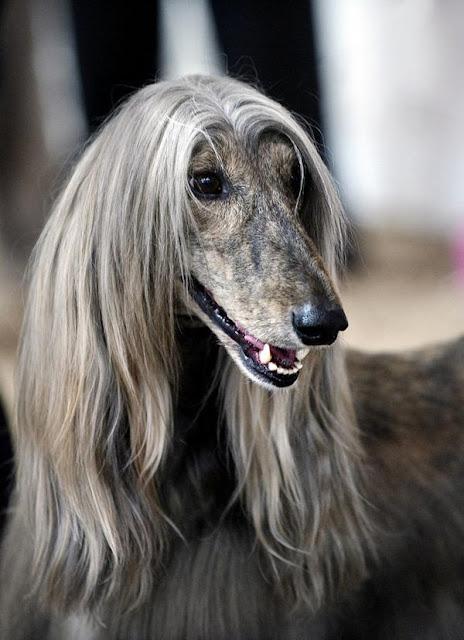 """19 loài động vật có """"mái tóc"""" phong cách """"chất chơi"""" ăn đứt con người"""