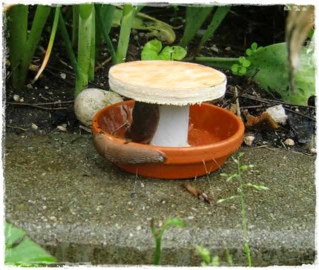 Gartenblog Topfgartenwelt Schädlinge: die DIY Schneckenfalle ist schnell gebaut und günstig