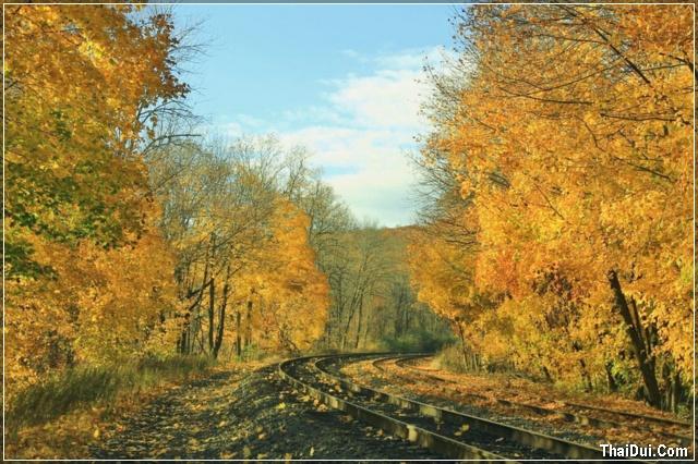 con đường rợp bóng mùa thu