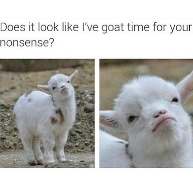 47 Random Memes Photos Of The Week