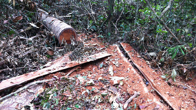 Study shows the cost of deforestation in Cambodia