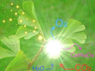 como acontece a fotossíntese