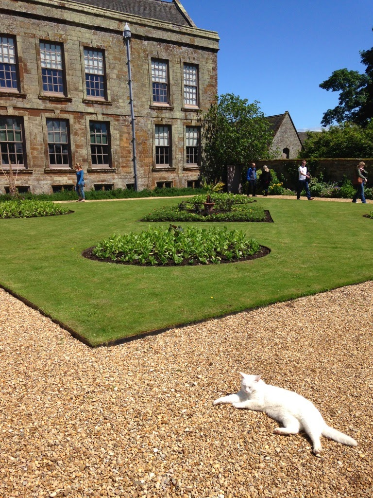 Canons Ashby National Trust cat