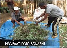 Manfaat Bokashi bagi tanah dan tanaman