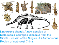 https://sciencythoughts.blogspot.com/2018/07/lingwulong-shenqi-new-species-of.html
