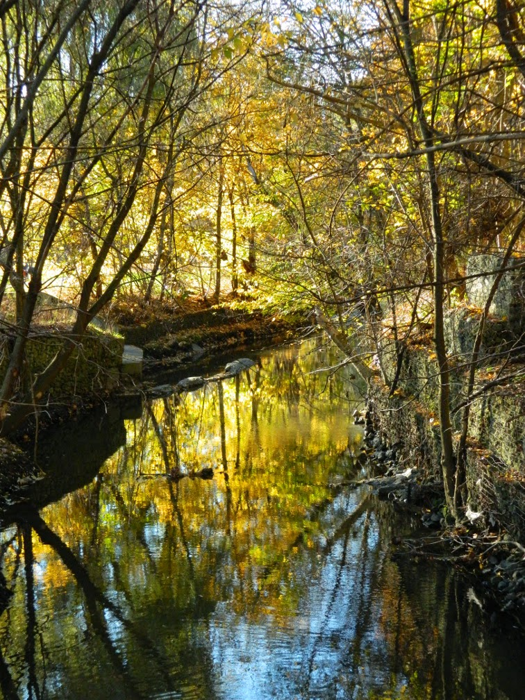 Taylor Creek Park Autumn foliage reflection by garden muses-not another Toronto gardening blog