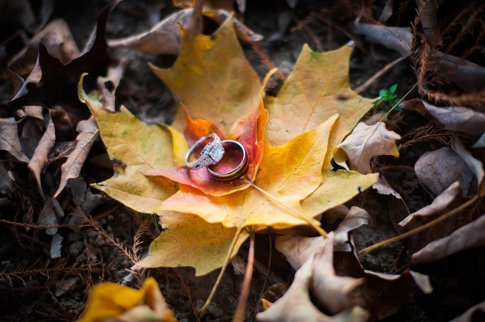 Fall Engagement Photos Longwood Gardens