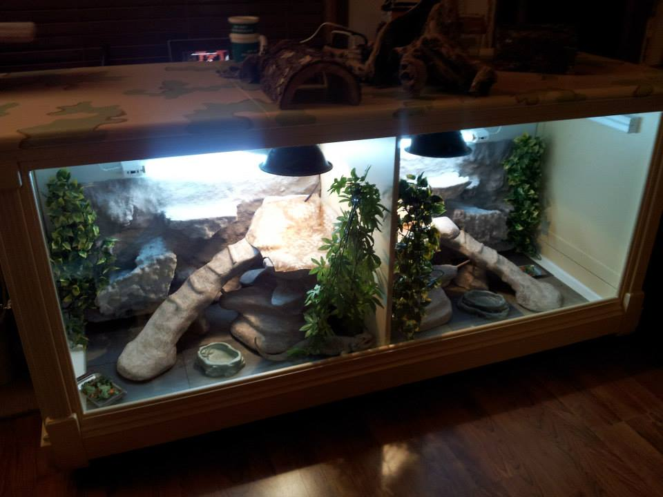 Interior Alaska Rae Rescue S Blog Bearded Dragon Care