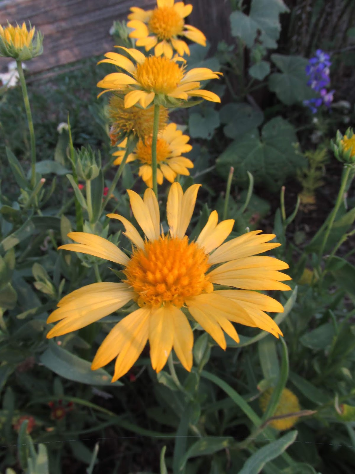 See The Beauty In The Ordinary End Of June Flower Garden