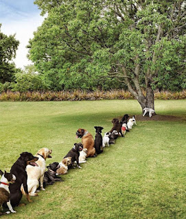 Dogs queueing patiently, waiting for the tree to become available