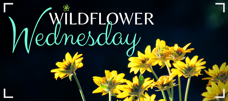 Wildflower Wednesday
