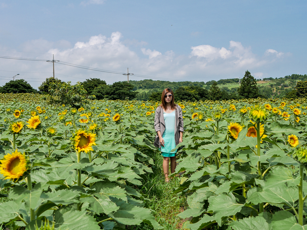 korea travel outfit fashion sunflower field jeju korea