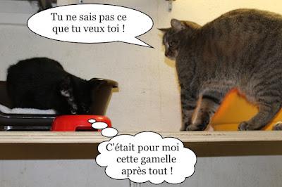 Deux chattes et une gamelle.