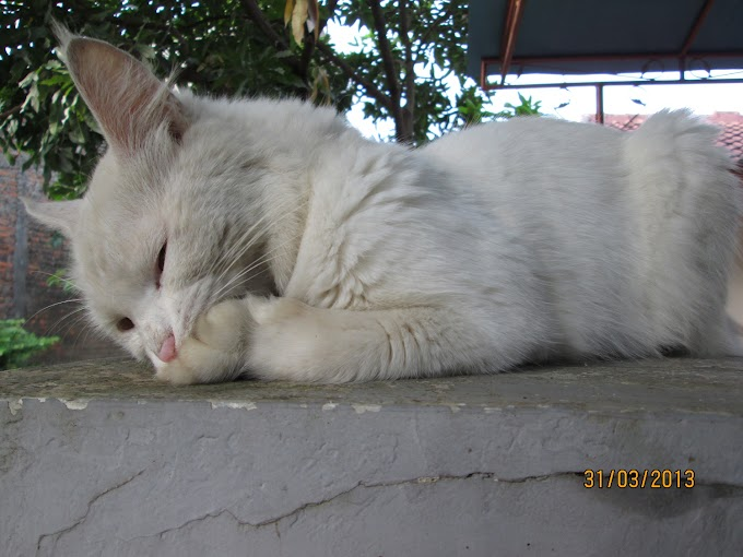 Kucing Siapa?