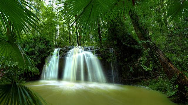 avis Bois de Palmier de Le Chat Dans L'Armoire, blog bougie, blog parfum, blog beauté