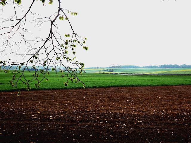 Lekko pagórkowata, rolnicza Opolszczyzna.